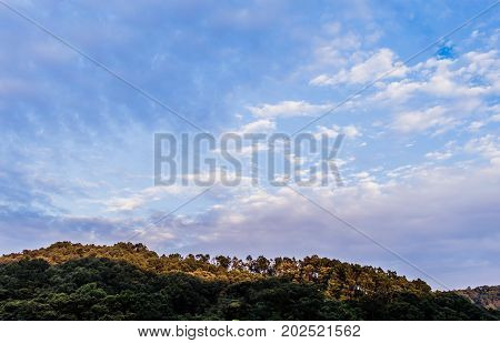 Tree Covered Mountain Under Blue Sky