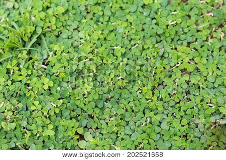 green leaves. Green background with leaves .