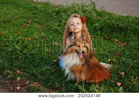 Cute little girl with a dog Sheltie breed. Best friends forever. Dog devotion. A girl and a pet in the park. She sits next to the doggy