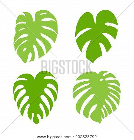 Monstera leaf  icon collection. Exotic tropical plant silhouettes