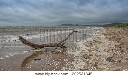 Seascape of a piece of driftwood on a deserted beach with a stormy sky on the west coast of scotland