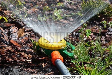 Close up on Lawn sprinkler spaying water over green grass with water hose. Irrigation system.