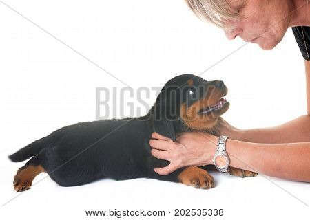 puppy rottweiler and woman in front of white background