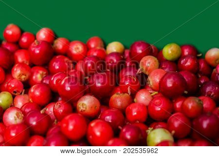 Forest cranberries on a green background. Autumn edible useful berries. Natural food of wild nature, rich in vitamins. Fall season of picking berries in Northern Europe and the tundra.