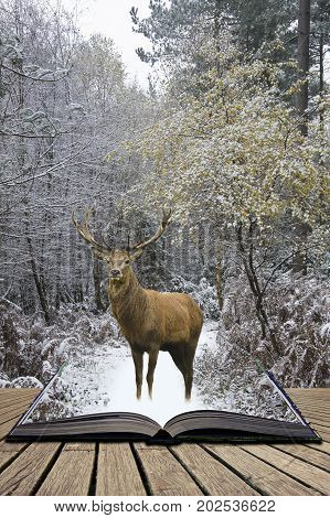 Beautiful Red Deer Stag In Snow Covered Festive Season Winter Forest Landscape Concept Coming Out Of