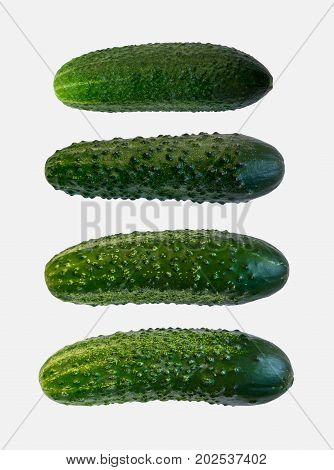 Collection Of Fresh Cucumbers Isolated