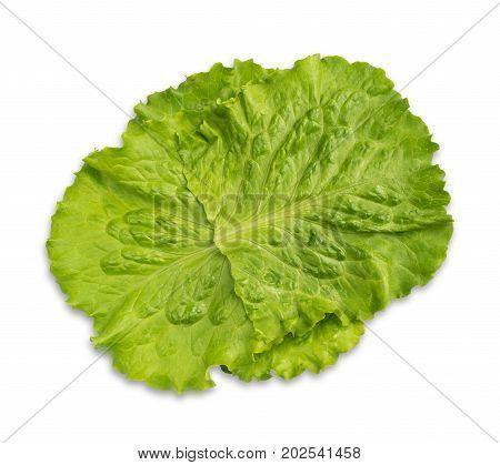 Fresh Green Lettuce Salad Leaves