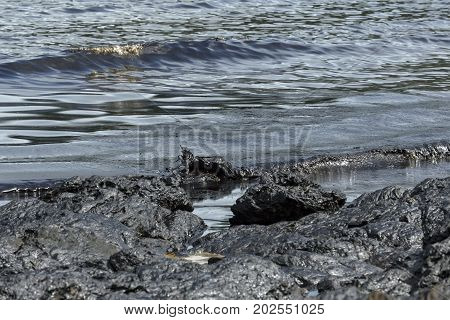 Contaminated oil stains mixed with sea water. Caused by accident oil tanker leaked off the coast.