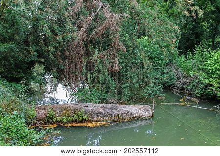 Fallen log in the muddy summer backwaters