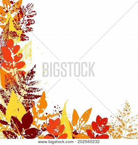 Vector background with autumn leaves. Colorful imprints foliage.