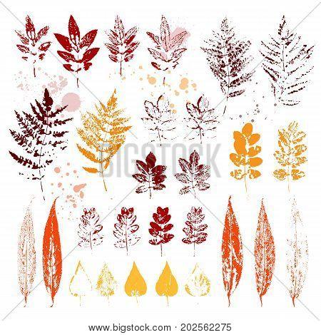Set of autumn leaves. Colorful imprints foliage. Vector illustration.