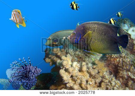 Fishfullreef