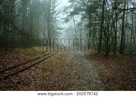 Forest road and railroad tracks in a misty forest.