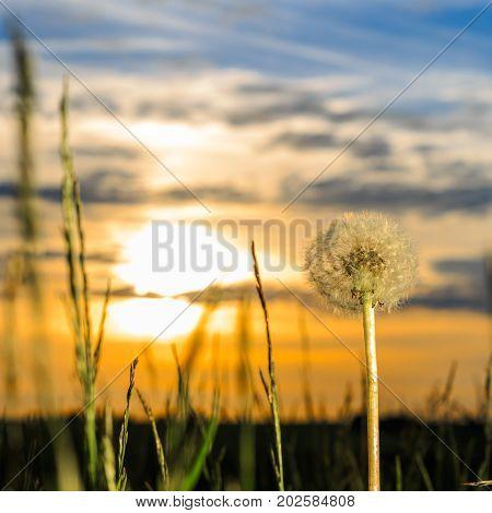 Fresh Dewy Green Grass At Sunrise.