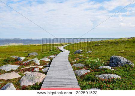 Tundra vegetation and a wooden walkway on the Bolshoi Island of the Zayatsky Solovetsky Archipelago, Russia.