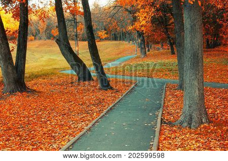 Autumn landscape with golden autumn trees and orange fallen leaves. Autumn deserted alley in cloudy autumn weather. Fallen autumn leaves on the ground in autumn park - colorful autumn landscape scene