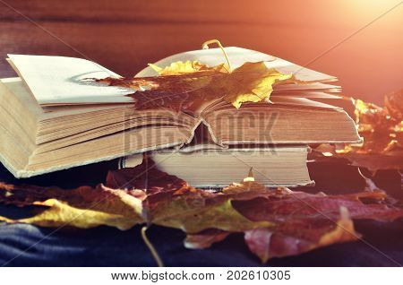 Autumn background. Autumn still life. Old books among the autumn leaves under soft sunlight - autumn background with golden autumn leaves and open book. Autumn concept