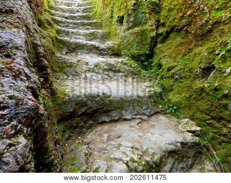 Medieval stone steps revealed from an archaeological dig, now being covered in moss over time.