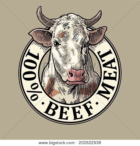 Cows head. 100 percent beef meat lettering. Hand drawn in a graphic style. Vintage color vector engraving illustration for label poster logotype. Isolated on gray background