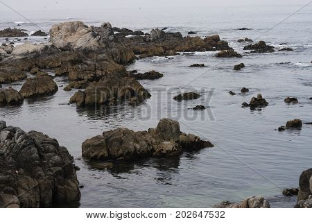 This is an image of tide pools along the coast of Pacific Grove, California.