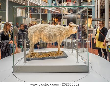 EDINBURGH, SCOTLAND - JULY 27: Dolly the Sheep stuffed and staying in the National Museum of Scotland on July 27, 2017 in Edinburgh Scotland. The National Museum is a landmark attraction in Scotland.
