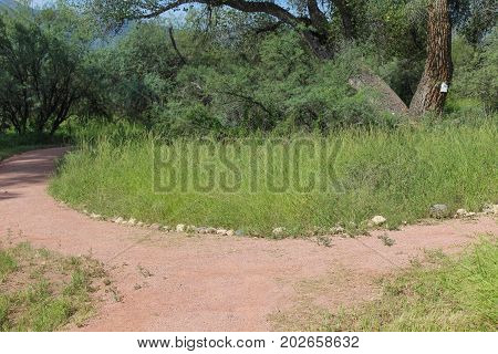 A fork in the forest trail with tall green grass, trees and foliage at Dead Horse Ranch State Park in Cottonwood, Arizona