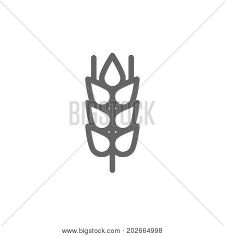 Simple wheat ear and grain line icon. Symbol and sign vector illustration design. Editable Stroke. Isolated on white background