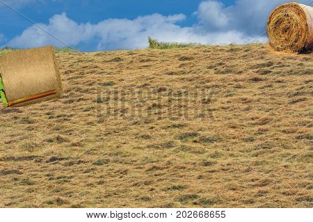 Field with round hay bales in summer after harvest.