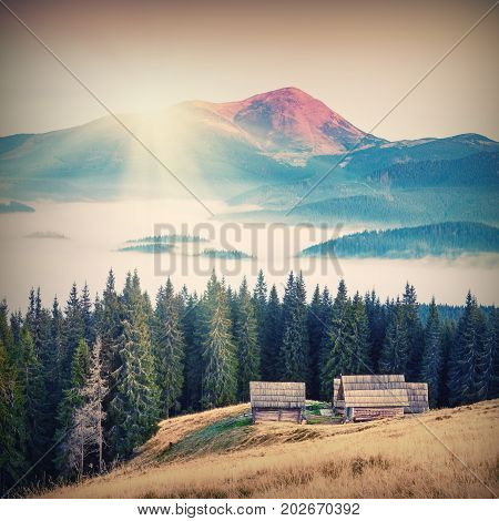 Sunrise above the high montain foggy valley with old wooden houses on a hill in a mountain forest. The Goverla higher mountain of Ukraine on a skyline. Vintage colors