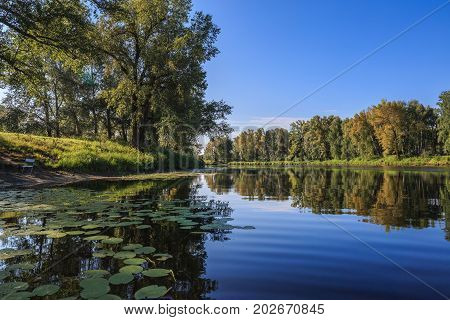 Beautiful summer landscape with a river and water lilies