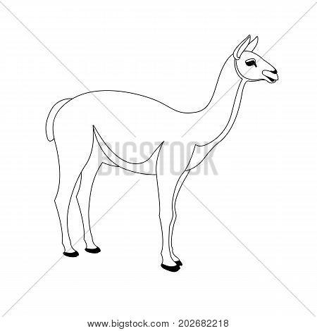 lama vector illustration line drawing profile side