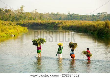 Rural Women Wading River Bundles Straw Nepal