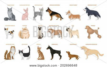 Dogs and cats set. Pets breed on white background.