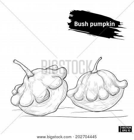 Bush Pumpkin Sketch Outline.
