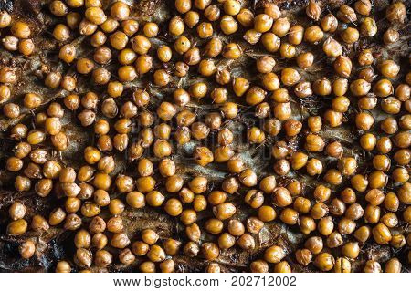 Background of chickpeas in caramel crust on parchment on a baking sheet horizontal