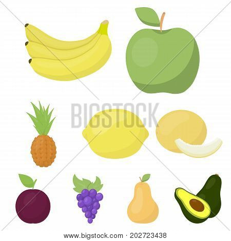 Fruits set icons in cartoon style. Big collection of fruits vector symbol stock