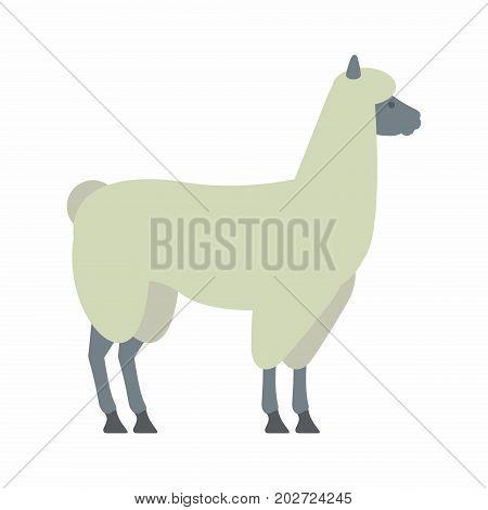 Lama. Illustration on white background. vector illustration