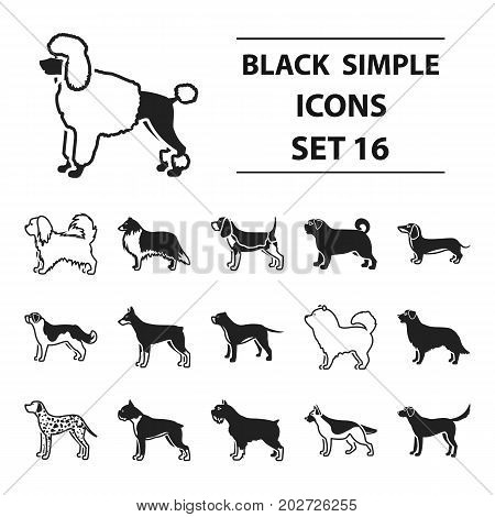 Dog breeds set icons in black style. Big collection dog breeds vector symbol stock