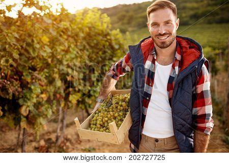 grape harvest- smiling wine maker family vineyard