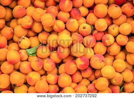 Fresh apricots at a street market in Leh, Ladakh district of Kashmir, India