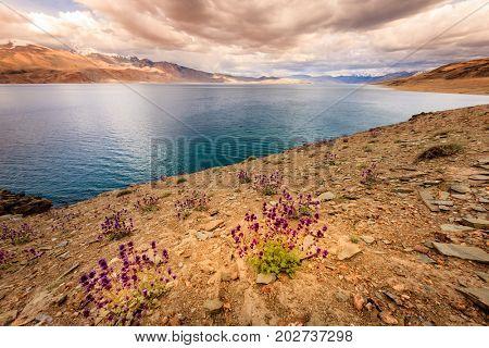 Alpine lake Tso Moriri in the Himalayas, Kashmir, India.