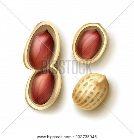 Vector set of whole and shelled peanuts with shell close up top view isolated on white background