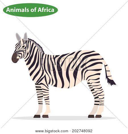Zebra zebra icon African animals. Flat design vector illustration vector.
