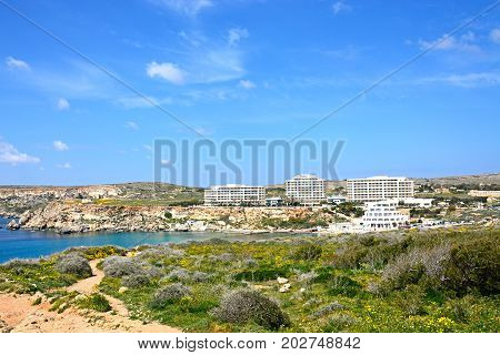 GOLDEN BAY, MALTA - MARCH 29, 2017 - Pretty Spring wildflowers with views towards the Mediterranean sea and hotels Golden Bay Malta Europe, March 29, 2017.