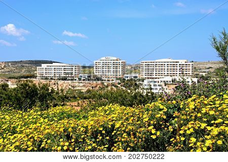 GOLDEN BAY, MALTA - MARCH 29, 2017 - Pretty Spring wildflowers with views towards hotels Golden Bay Malta Europe, March 29, 2017.