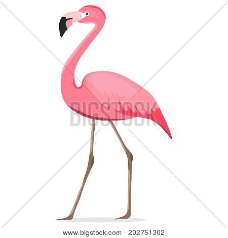 Flamingo pink flamingo. Flat design vector illustration vector.