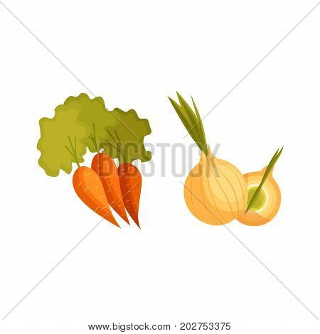 Cartoon style vegetables, farm products - carrot and bulb onion, vector illustration isolated on white background. Cartoon style whole raw carrot and onion vegetable, farm product