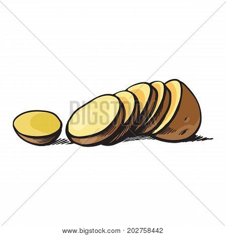 vector sketch cartoon ripe raw unpeeled sliced yellow potato with slices .Isolated illustration on a white background. Vegetable fresh natural product, healthy lifestyle, eating concept