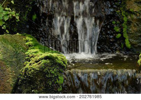 Green wet moss on the rock waterfall