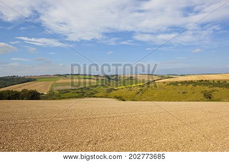 Cultivated Field And Scenery